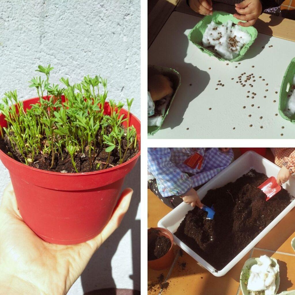 semillas germinadas